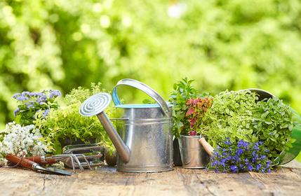 Entretien jardin orgeval orgevalscope for Annonce entretien jardin